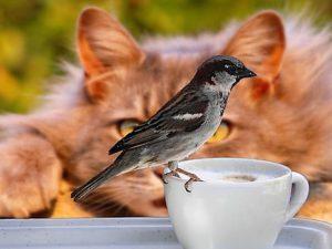 Cat watching bird sitting on edge of coffee cup