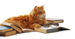 Orange cat lying on books, pair of glasses on one book