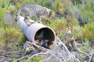 cat on top of pipe; kittens hiding inside