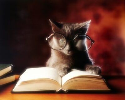 small black cat with glasses reading book