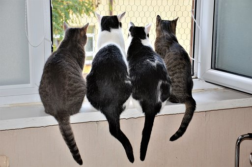 4 cat friends in window
