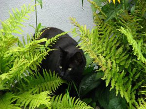 cat exploring in ferns
