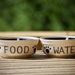 Food and water dishes for cat