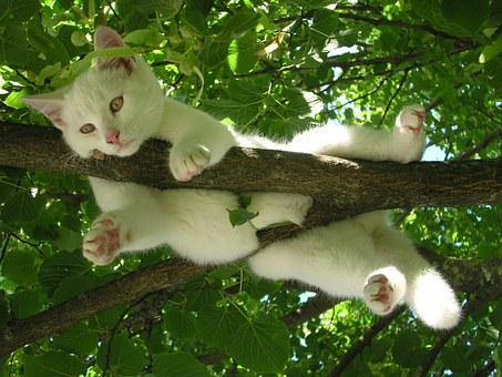 white cat sprawled over tree limb