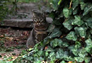 Dark tiger cat next to green leaves
