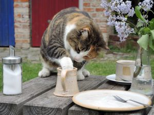 Cat on picnic table, dishes, cat has paw in mug