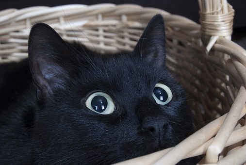 Black cat hiding in basket