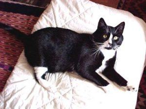 tuxedo cat lying on white blanket