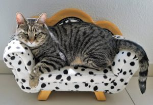 large grey tiger cat in small polka-dot sofa chair