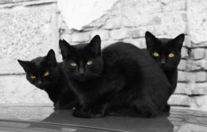 3 black cats seated in group