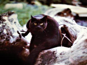 black cat on log