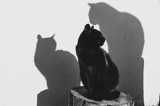 One black cat, two shadows