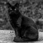 Black cat, seated