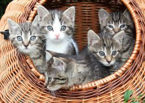 Large round basket, 5 kittens