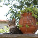 Cat lying next to large earthenware pot with plant