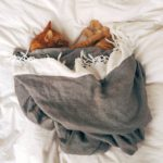 Small brown cat sleeping in a grey blanket
