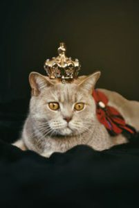 Tan cat reclining, wearing gold crown