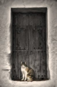 White and grey cat sitting in dark grey doorway
