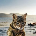 Tabby cat with water and boat in background