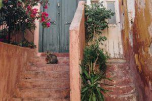 Cat on steps in front of doorway