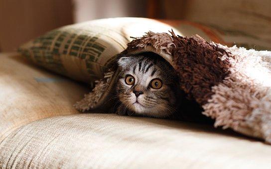 Small cat hiding under rug