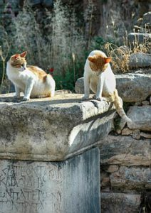 Two cats sitting on a stone pillar