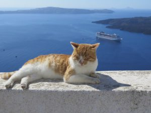 Cat on wall overlooking ocean and islands