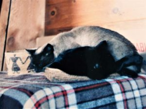 Siamese cat sleeping on top of black cat