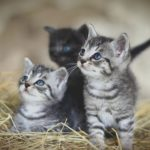 3 small kittens, looking up