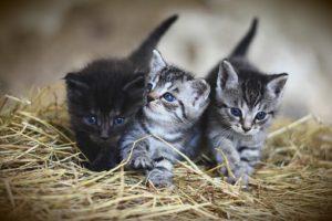 e kittens walking side by side in hay