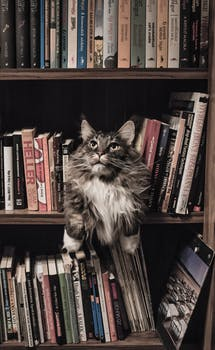 Cat on books in bookshelf