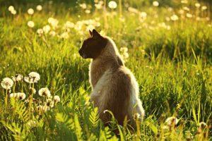 Siamese cat sitting in greenery