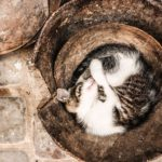 Cat curled up in bowl