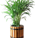 many-branched green palm plant in brown container