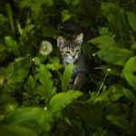 Cat in tall greenery