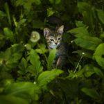 Cat in tall greenery