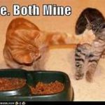 cat at food bowl, pushing away another cat