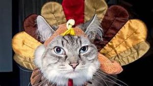 cat in turkey costume