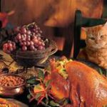 cooked turkey on table; cat looking