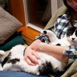 Kitty sprawled in owner's lap