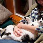 Kitty sprawled in owner's lap