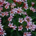 small 5-petal pink flowers, orange centers, greenery
