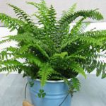 green plant, many leaves, in blue bucket