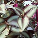 Plant leaves, purple and green