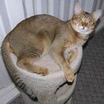 tabby cat on cat bed