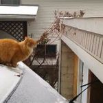 Orange cat about to jump