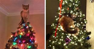 Cat on top of Christmas tree