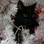 Black cat head in white Christmas tree