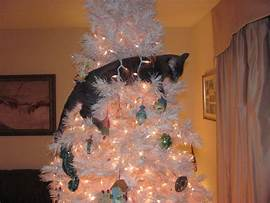 black cat in white Christmas tree