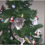 cat in tree, playing with ornament